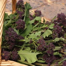 Purple_Sprouting_Broccoli