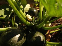 Satellite fruit