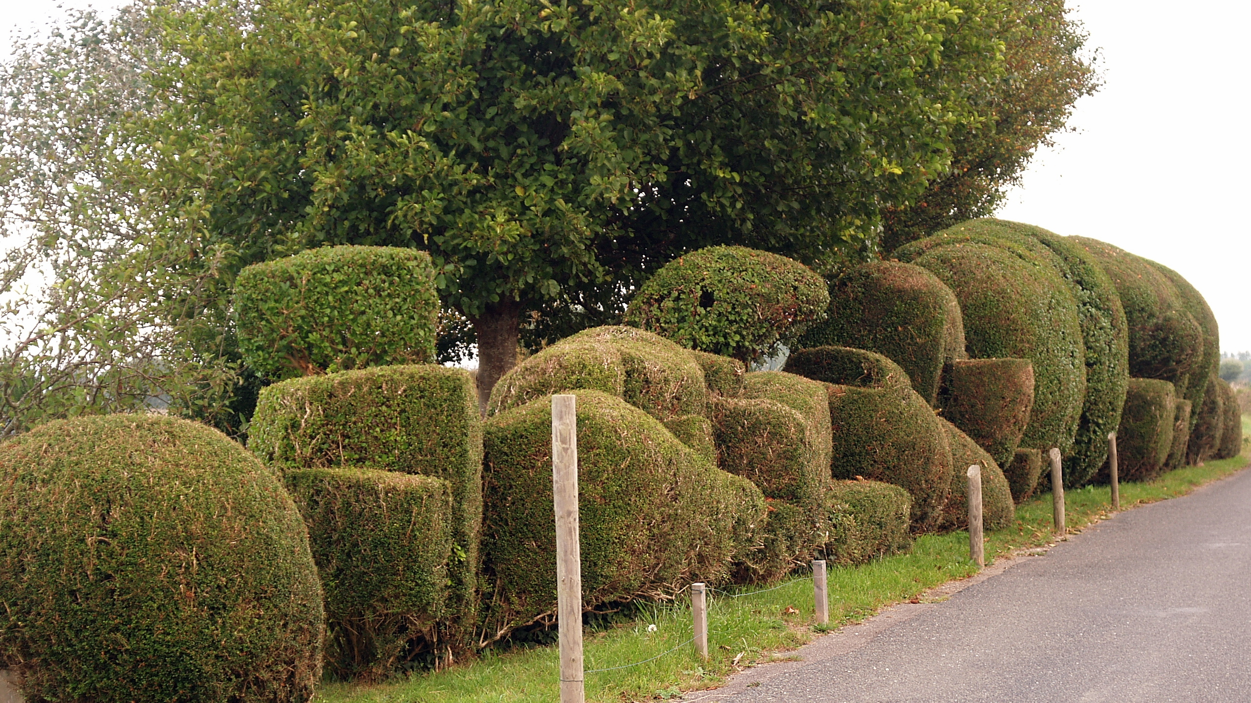 Cloud pruned hedges \u0026 topiary fun | An Englishman\u0027s Garden Adventures