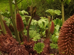 Stands of Gunnera fill part of the lower (wet) moat