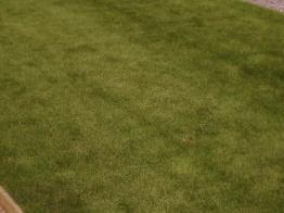 a velvety green carpet