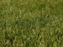 only fine grass species