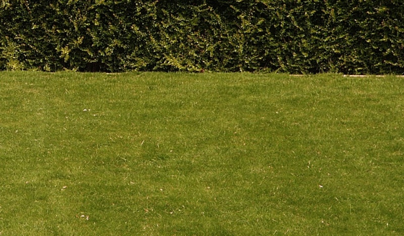 Creating an ornamental lawn an englishman 39 s garden for Ornamental lawn grass