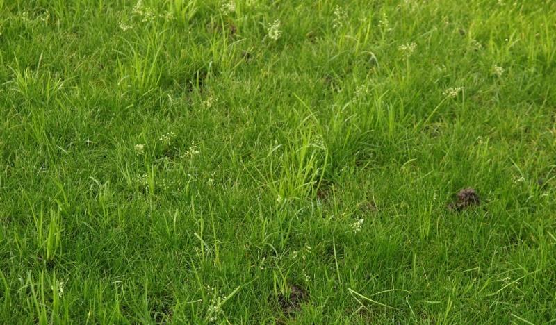 Lawn Nov - Weeds