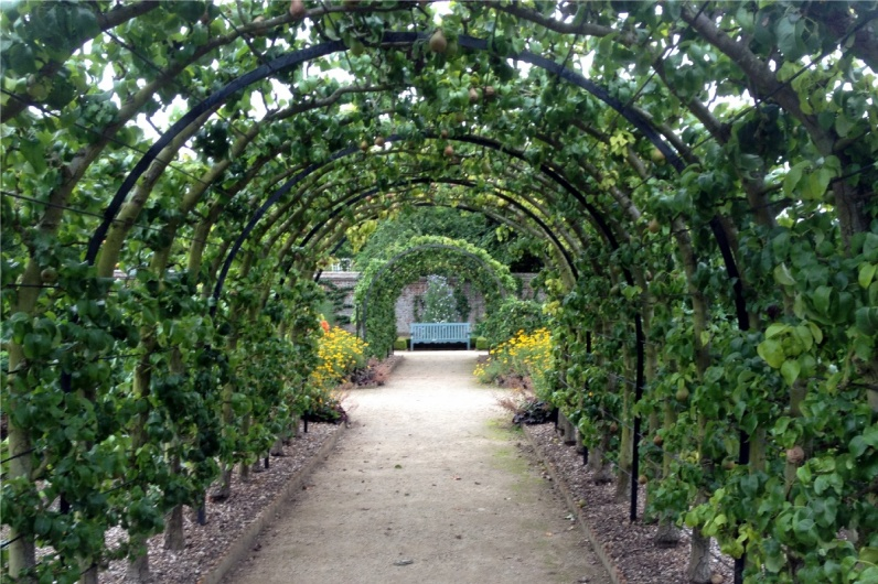 This beautiful arched tunnel is lined with trained pear trees