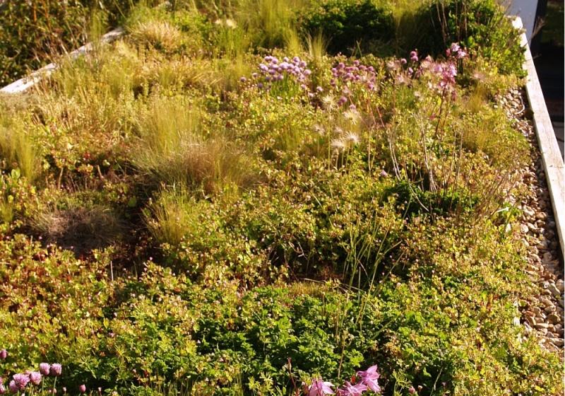 Green_roof_Summer_2014_3