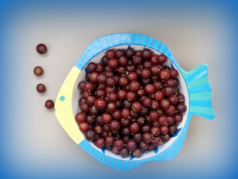 Gooseberries in a fish-dish