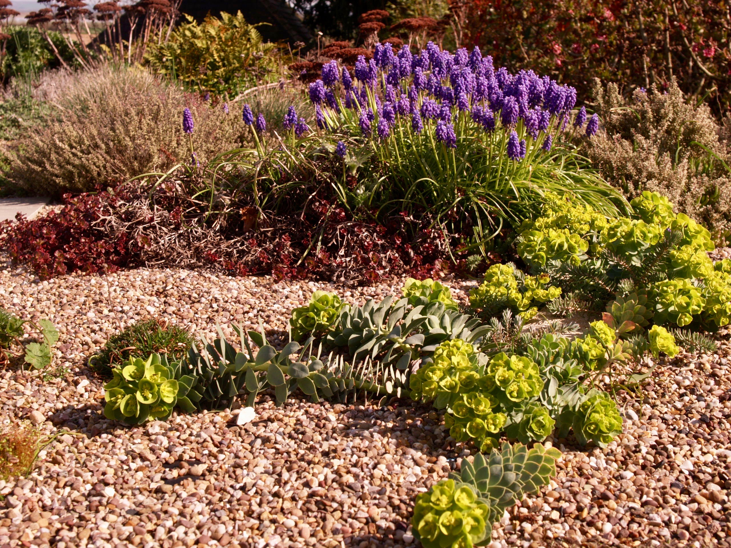 Green Roof – early spring 2017 | An Englishman\'s Garden Adventures
