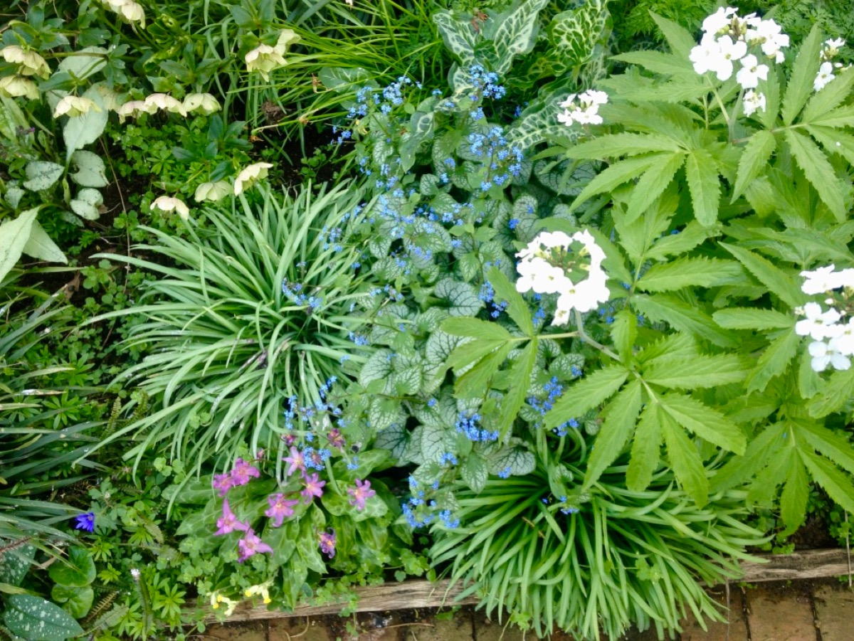 A Tapestry Of Shade Loving Plants An Englishman 39 S Garden