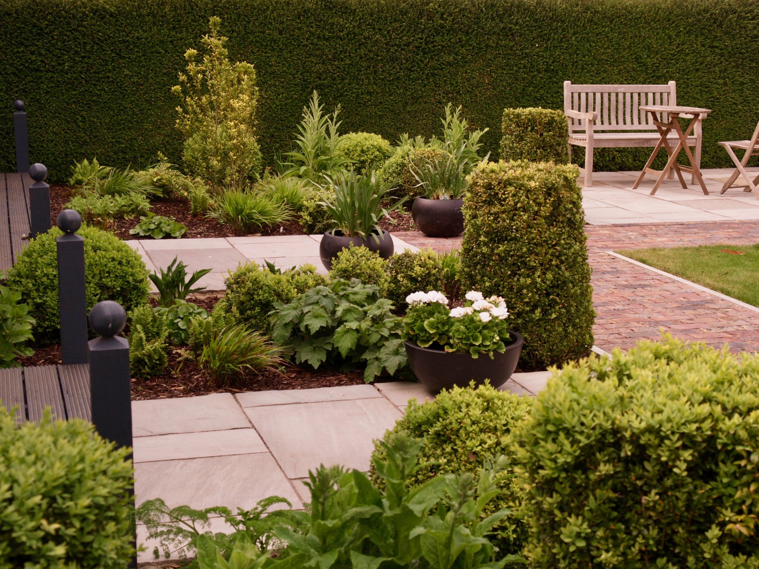 Five fantastic foliage plants for connoisseurs   An Englishman\'s ...