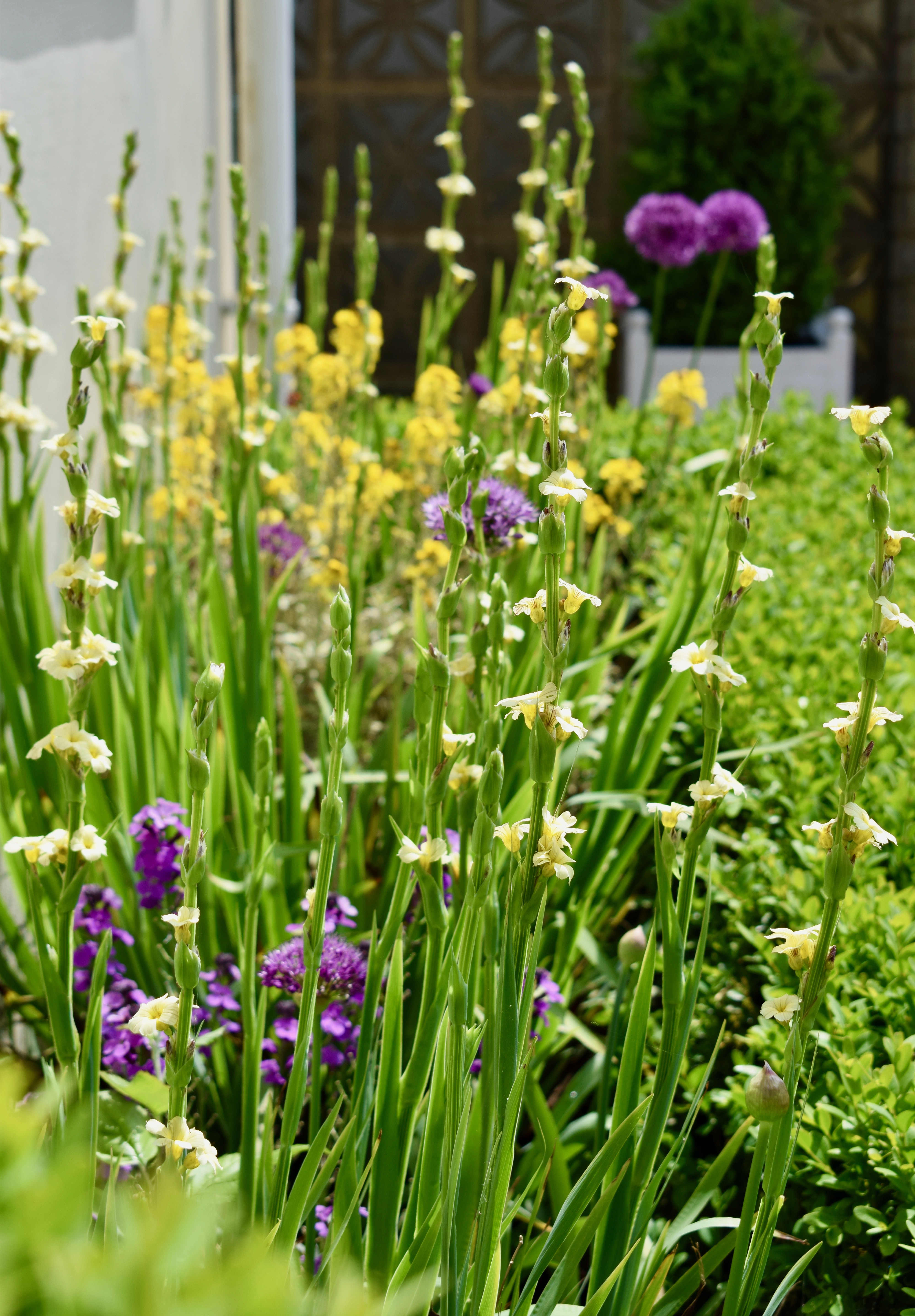 Meadow Effect For A Hot Dry Bed An Englishmans Garden Adventures